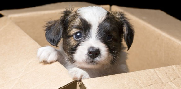 Shipping Pets to South Africa